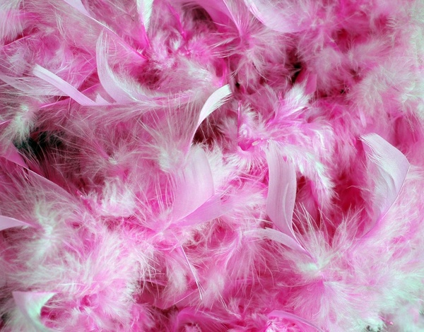 Background pink feathers